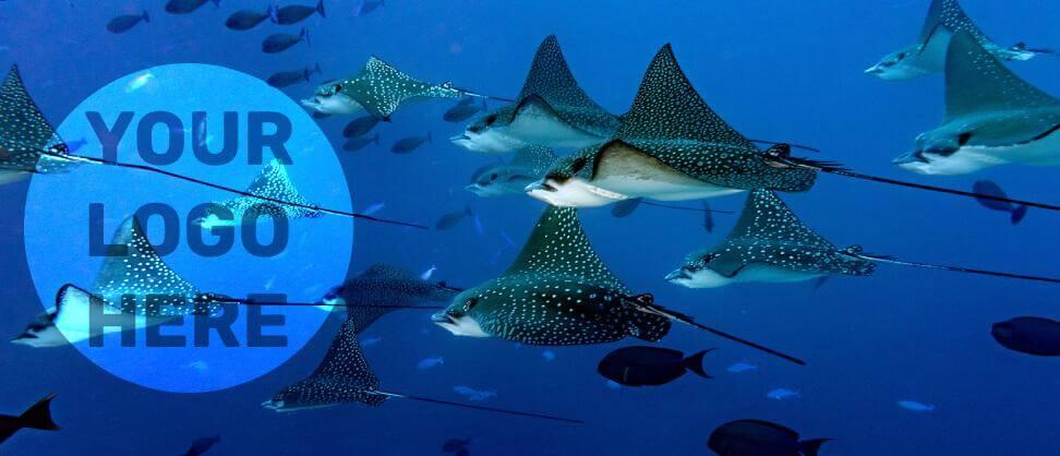 Blog Dive Forever Logo Competition 1200x Jpg